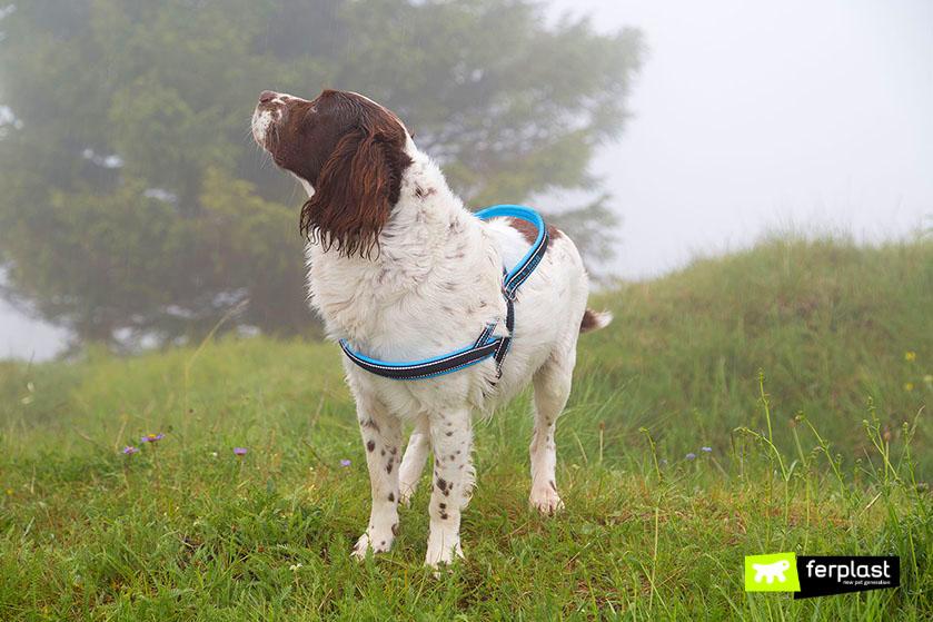 como-ocorre-pesquisa-superfície-unidade-de-cachorro