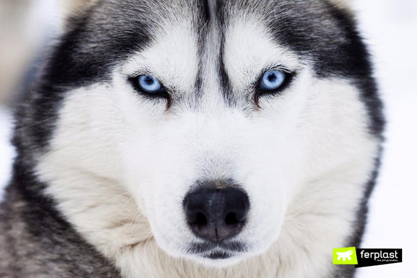 como-vê-cores-cão