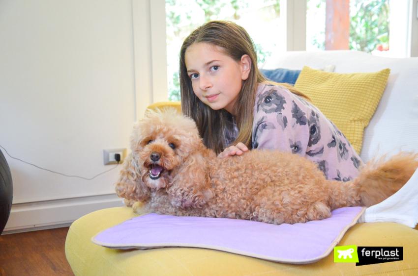 ferplast-blog-собака-кровать-собаки-пространства-одеяло-nanna-soft