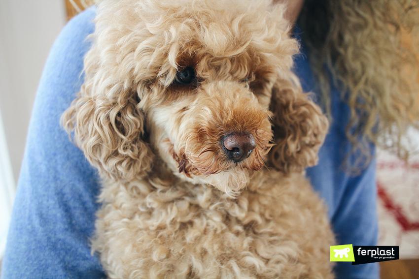 ferplast-blog-cane-lindo-pet-lovers