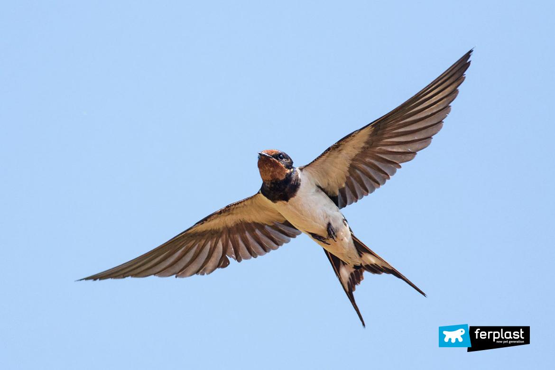 ferplast-blog-curiosità-sulle-rondini-migrazione