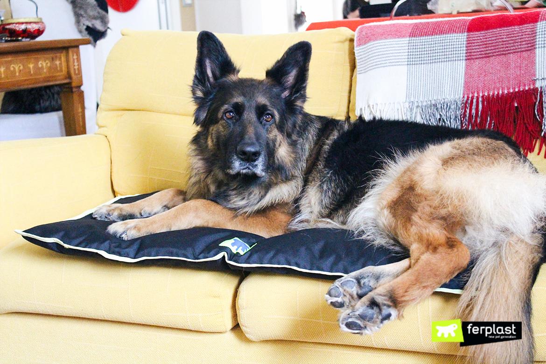 ferplast-blog-коврик-для-собак-jolly