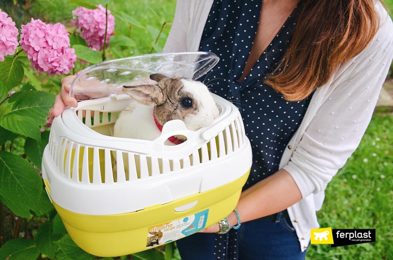ferplast blog petlovers bunny кролик