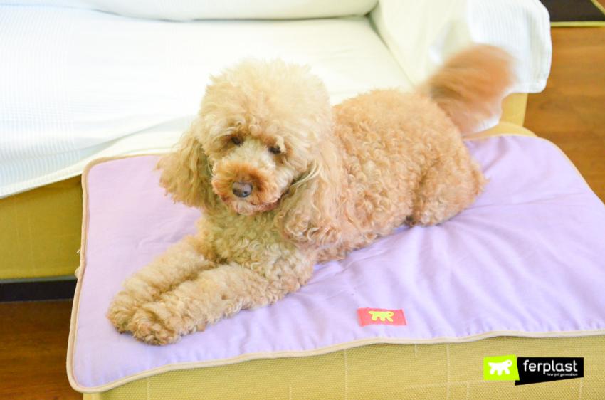ferplast-собака-пространство-кровать-собаки
