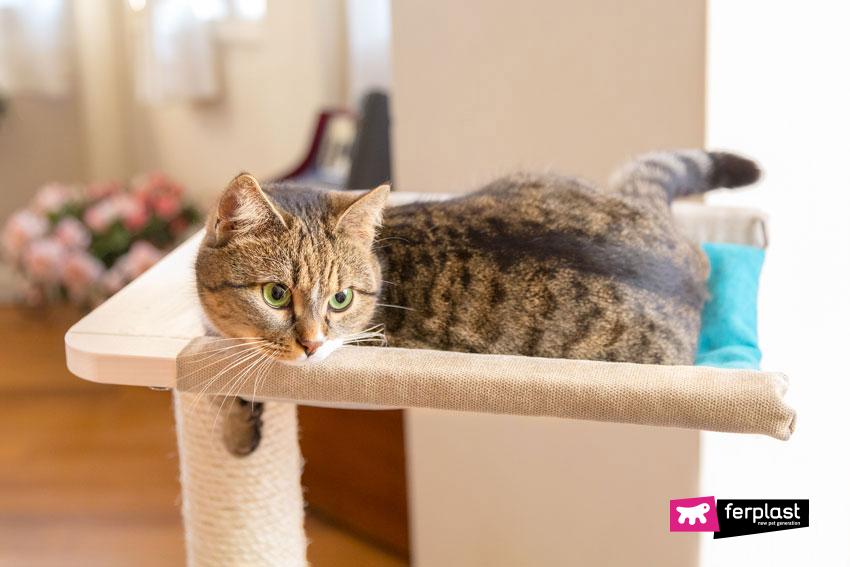 gatto-ferplast-petlover-blog