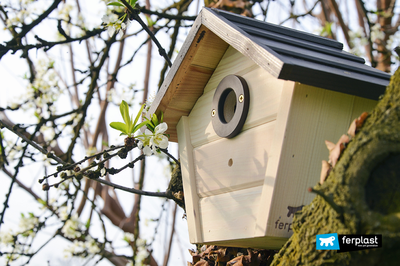nido-per-uccelli-nest-migrazione