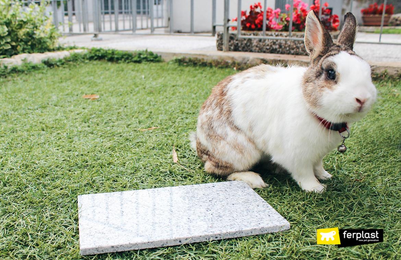 потому что кролики ассоциировать пасхальный