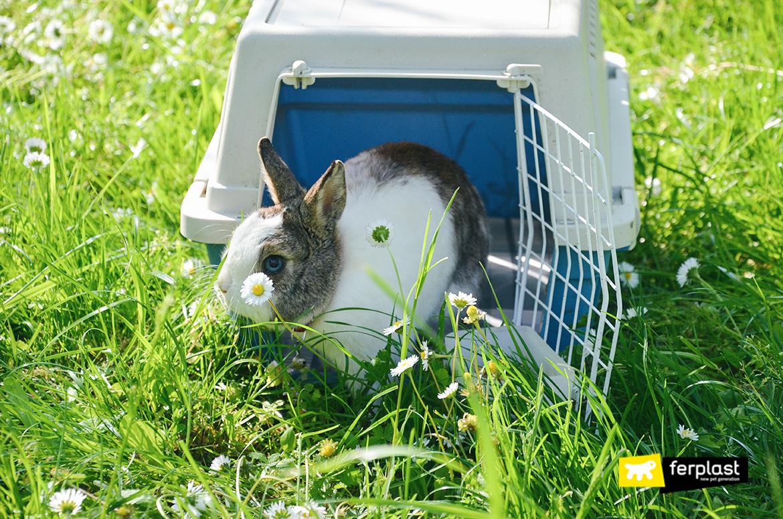 потому что кролик это Символ Пасхи