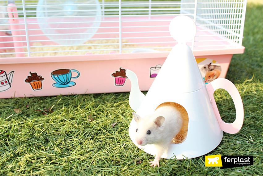 comida hamster conselho