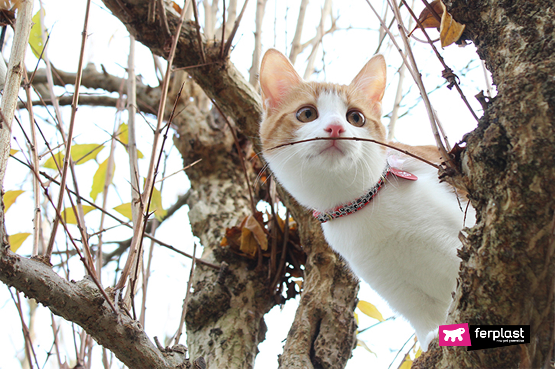 весна аллергия кот
