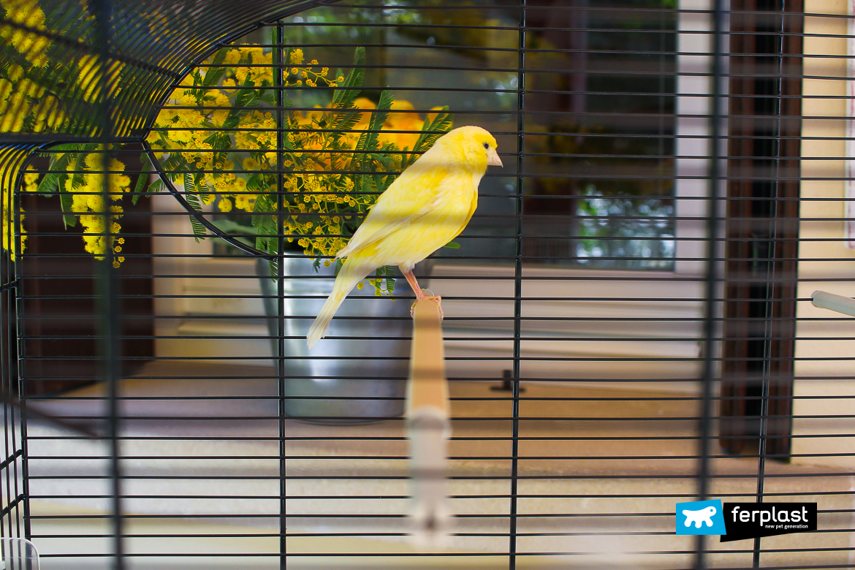 подготовить клетка муфта птицы