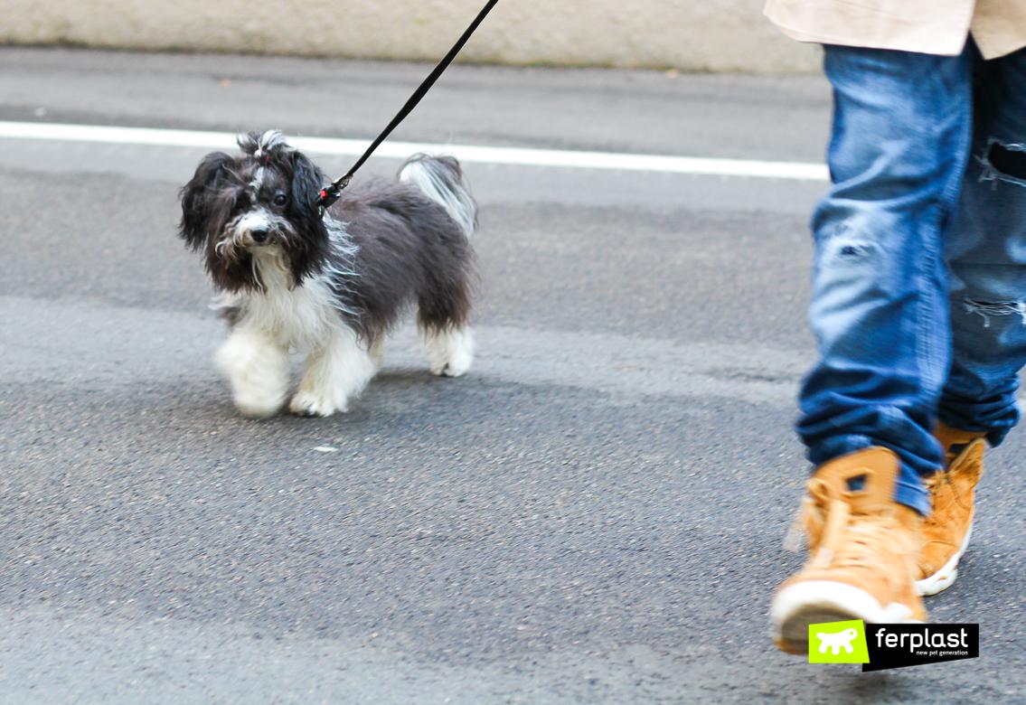 andar cidade cão tamanho pequeno