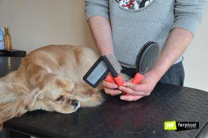 собака теряет волосы что делать