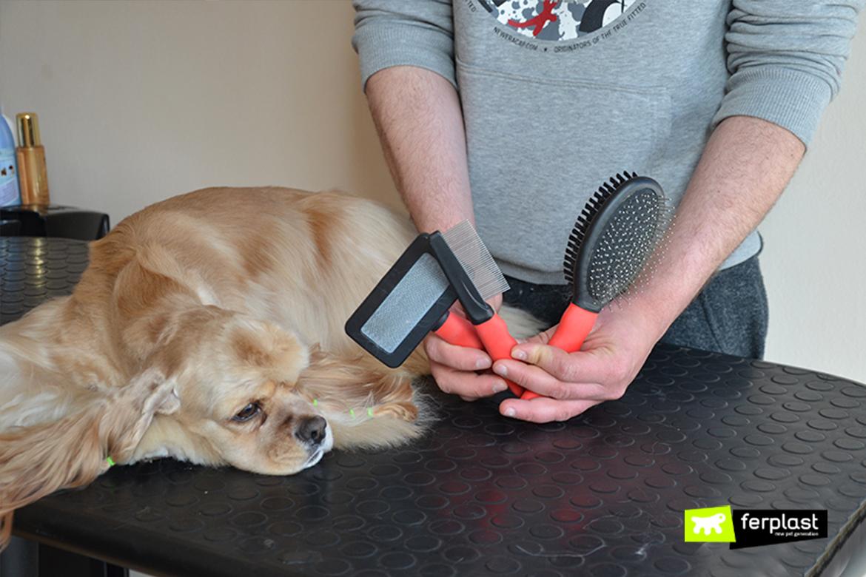 perro pierde pelo que hacer