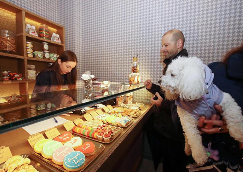 cães podem comer doces confeitaria