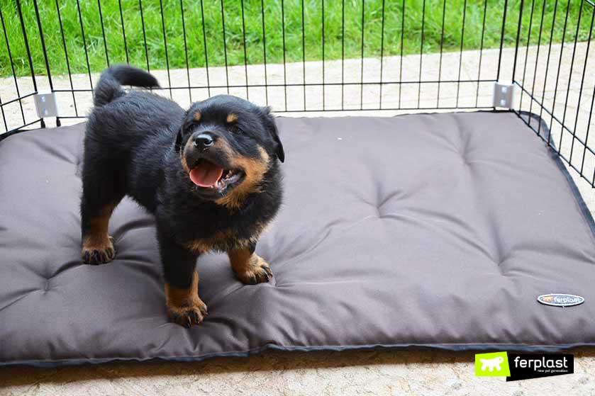 cão local de treinamento almofada e resistente a arranhões