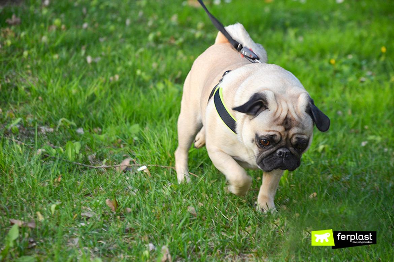 собака есть трава причины