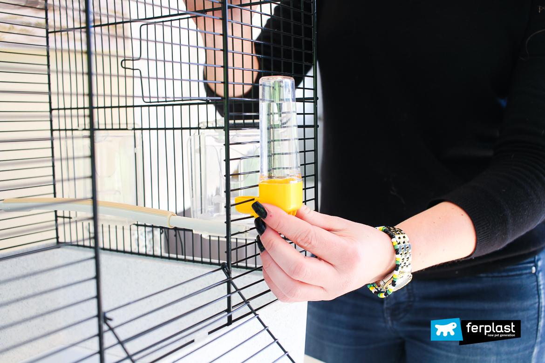 preparação gaiola canto para cánarios