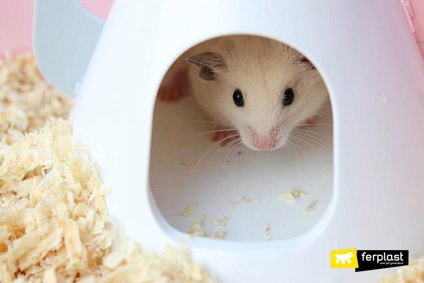 dieta hamster semente vegetal fornecimento correto
