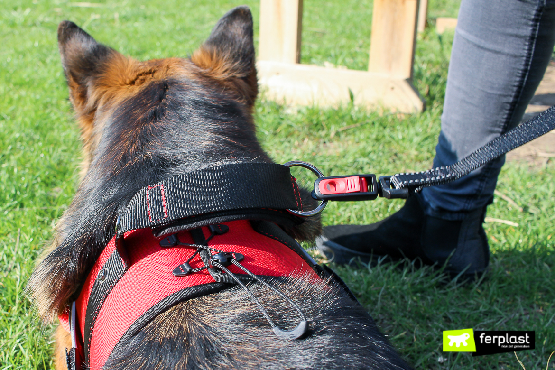 ferplast hercules peitoral para cães