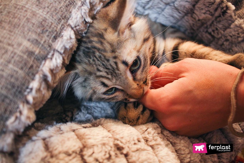 кошек ferplast потому что облизывание