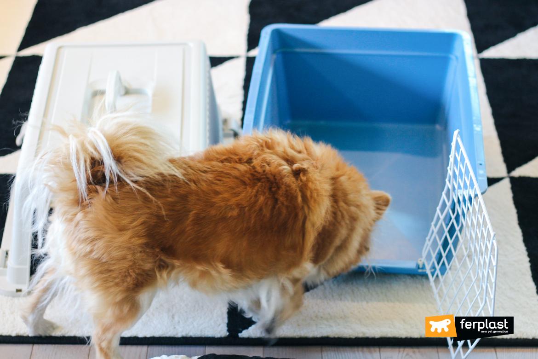 medir caixa de transporte atlas cão pet