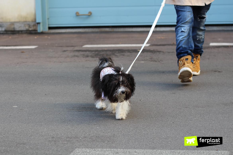 andar com cão