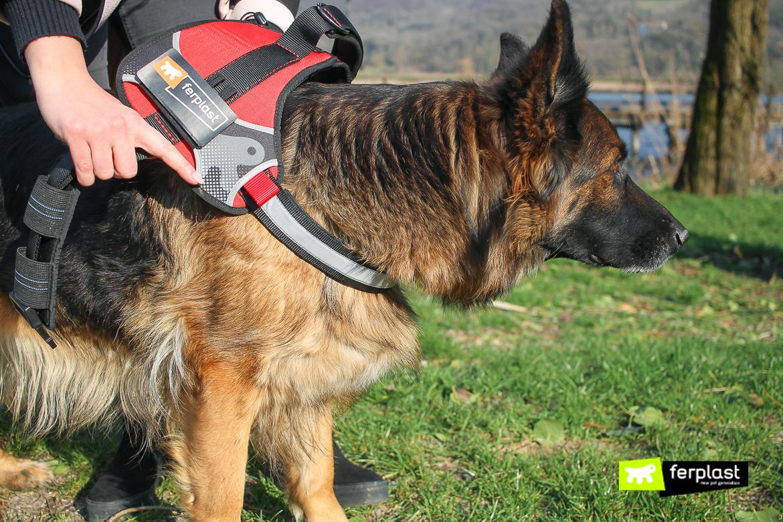 шлейка для собак средний размер