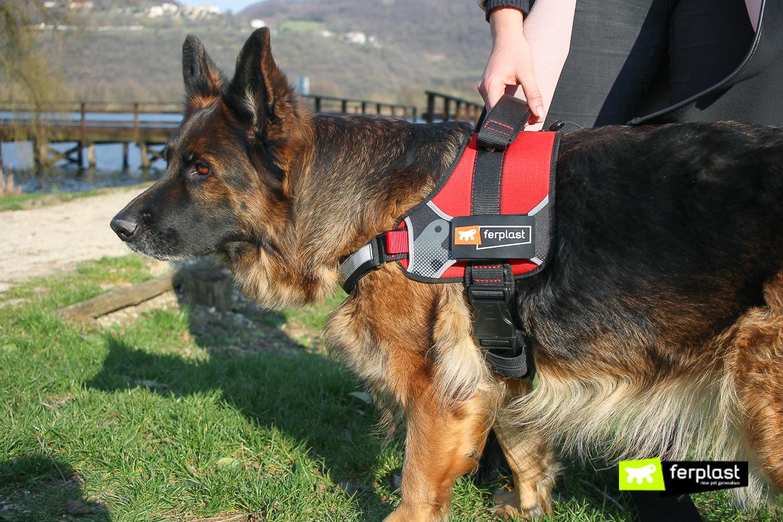 шлейка для собак маленький размер