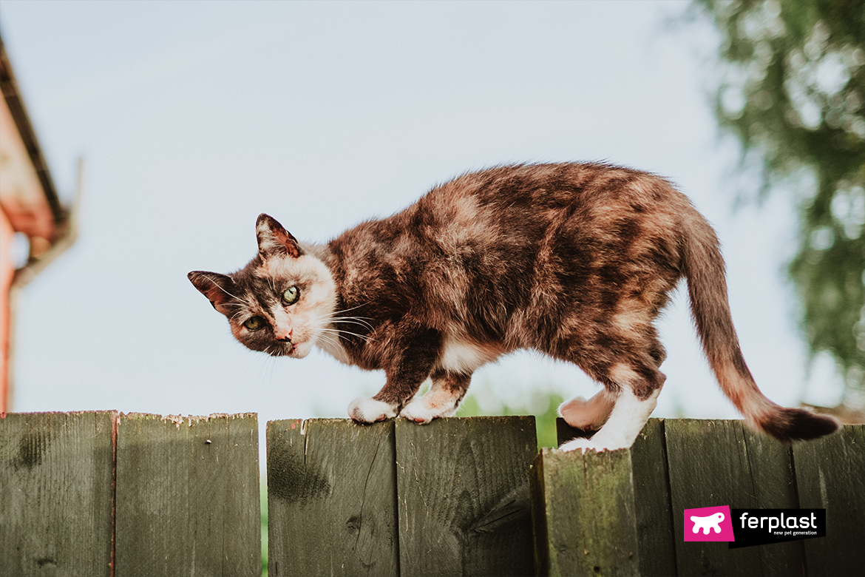 баланс чувств кот ferplast