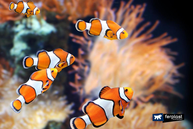 ferplast рыба аквариум