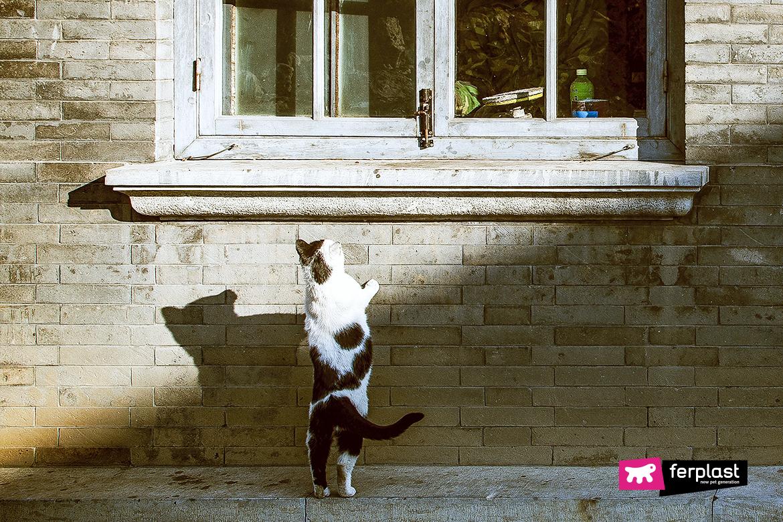коты чувство ориентации ferplast