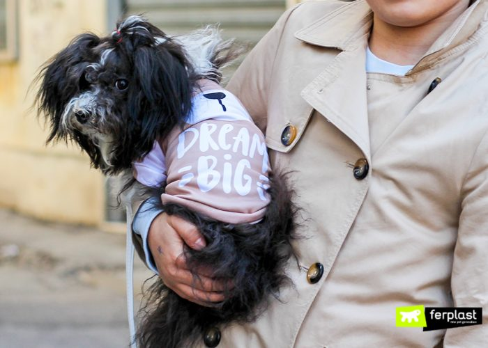 CAMISETAS PARA CÃES: A NOVA CITTY COLLECTION Primavera-Verão 2018