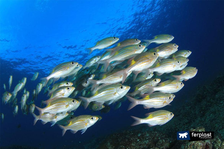рыба аквариум привычки