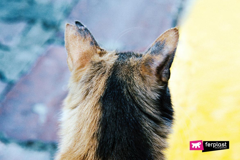 чувств кот слух ferplast