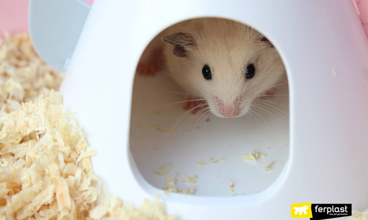 WHICH HAMSTERS ARE THE MOST OUTGOING?