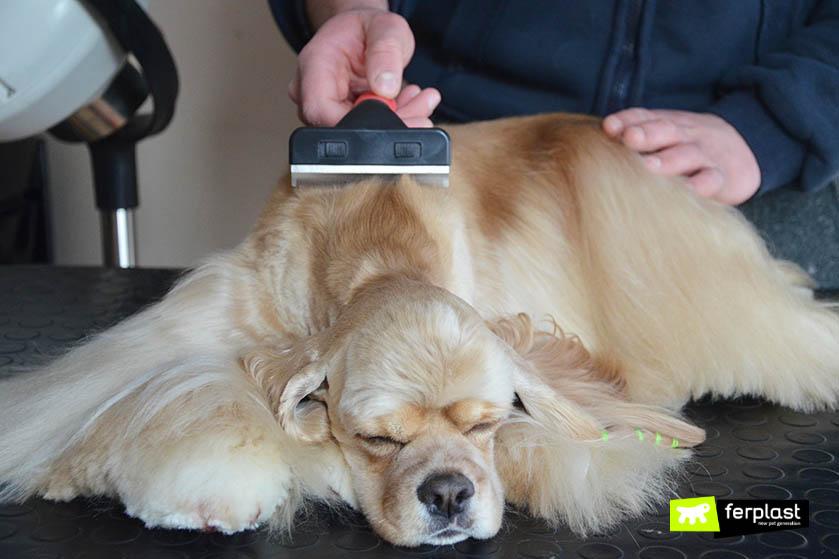 trimming cão cabelos compridos