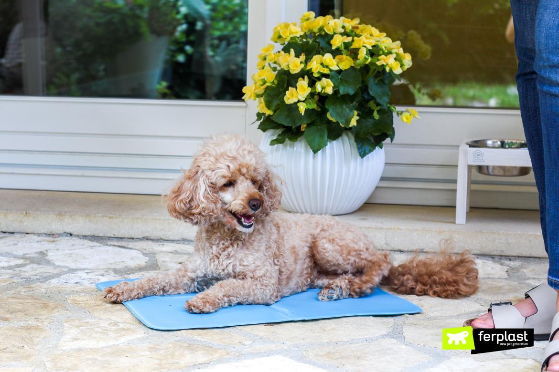 обновление собак лето