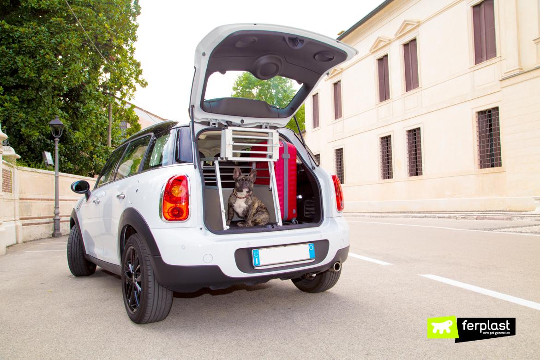 автомобиль как путешествие c собак безопасность