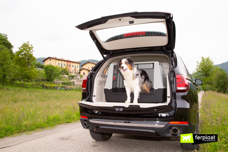 автомобиль c собак
