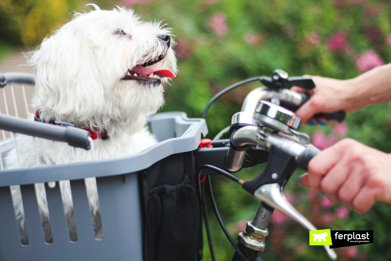 собака на велосипеде ferplast