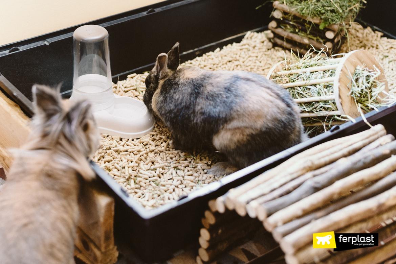 как избежать обезвоживание кролик