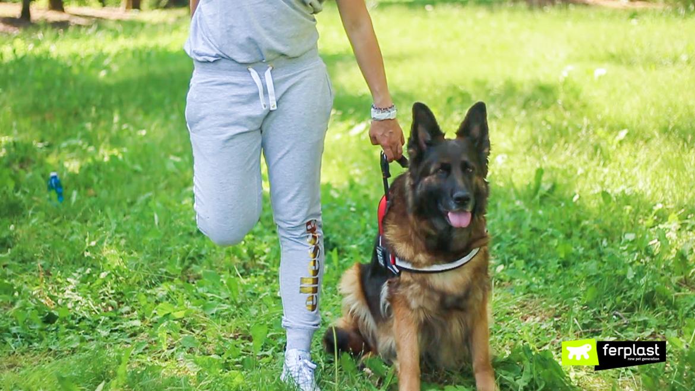 спорт с собак