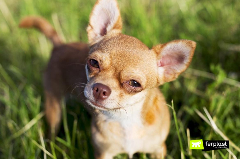 ferplast блог бега маленькие собаки