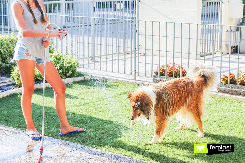 ferplast dog splash banho cao