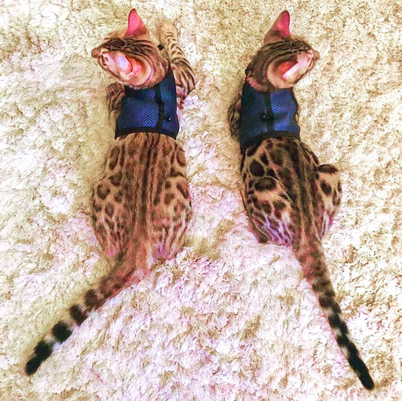 кошек best of instagram
