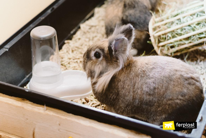 сколько воды должен питьевой кролик