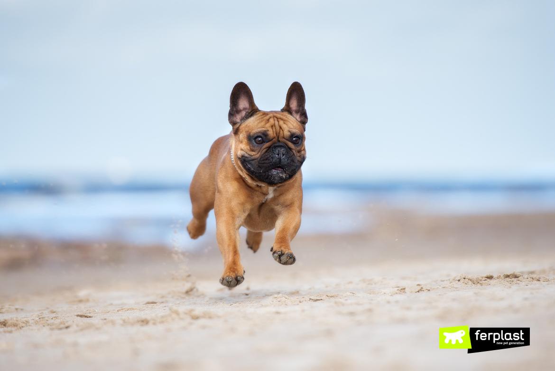Пляжи в Италия для собак