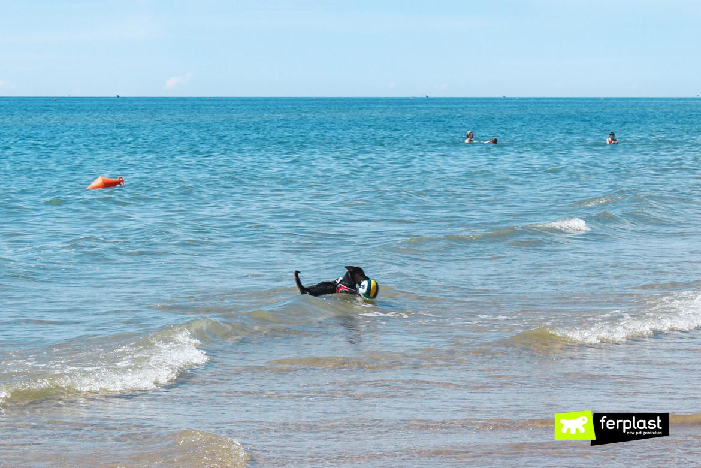 Пляжи Апулии для собак