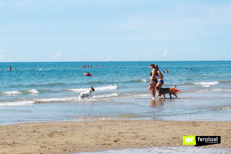 Пляжи в Венето для собак